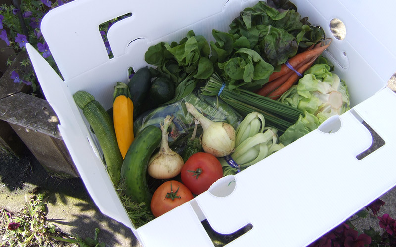 Boxes and Totes - Adapt8 manufacturers of Solexx greenhouse